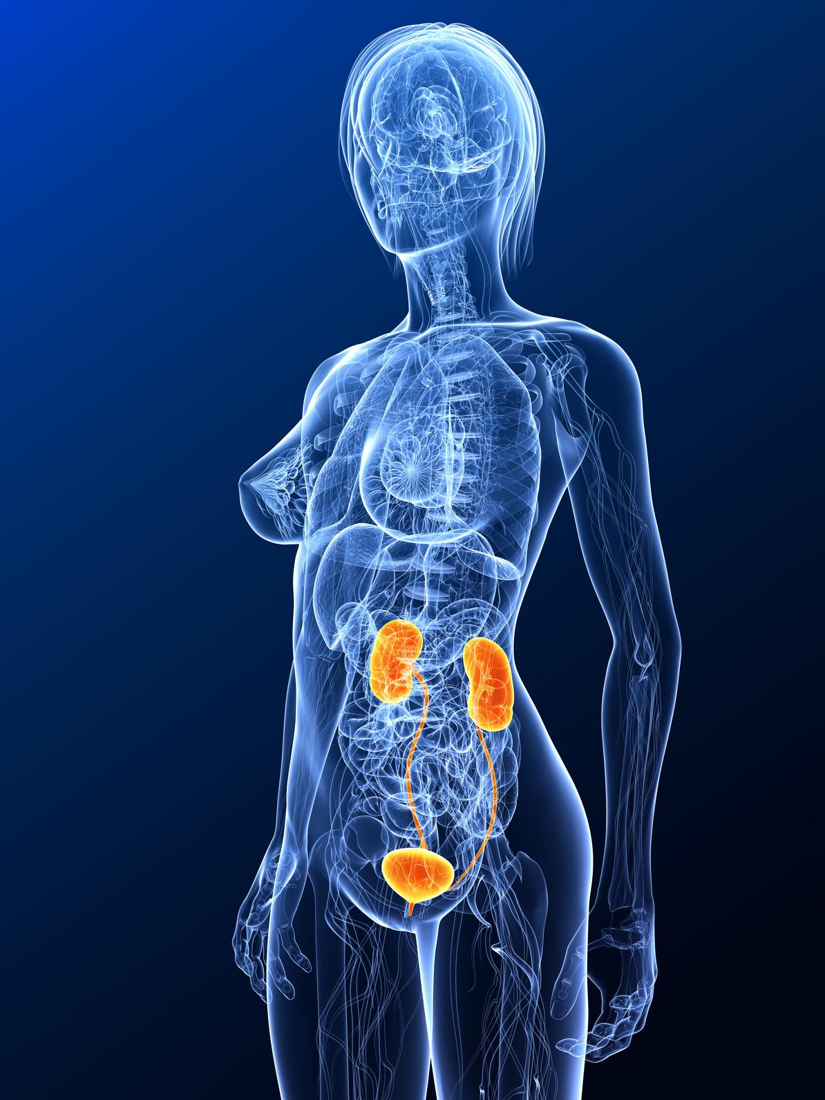 Reizblase (überaktive Blase) - Ursachen, Symptome und Behandlung